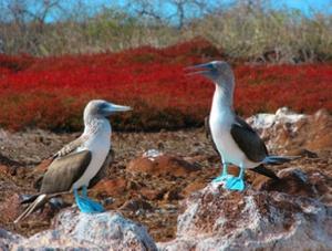 Galapagosbirds